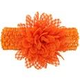NHWO0686-Orange