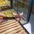 NHDI1170308-Christmas-deer-head-(opp-bag-in-bulk)
