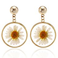 Sweet Little Daisy Earring Korean Fashion Simple Transparent Dried Flower Circle Earrings NHPF196114