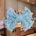 NHDQ899158-320-Spiraea-chrysanthemum-blue