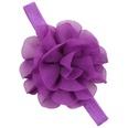 NHLI985680-purple