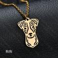 NHHF1010558-Dog-gold