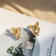 NHAI1406126-Golden-butterfly