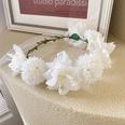 NHSM1556280-Hibiscus-flower-white