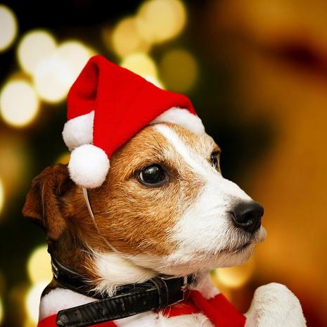 Las decoraciones de los sombreros del animal doméstico de la felpa de la franela de la Navidad venden al por mayor Nihaojewelry NHGAL411186's discount tags